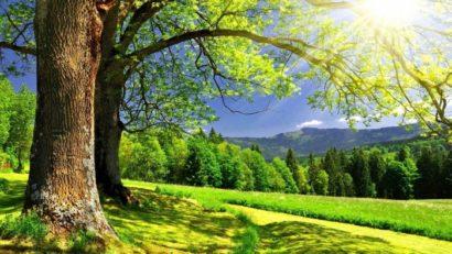 Биологические часы активности деревьев